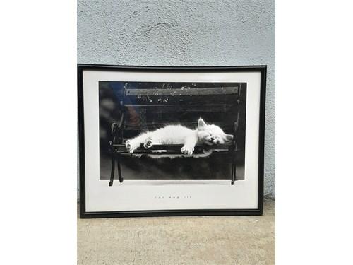 Cat Print by David Mcener