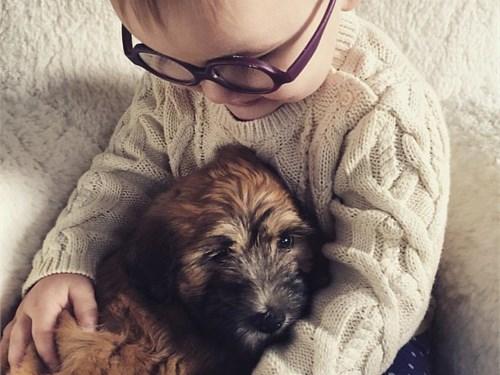 Soft Coated WHEATEN Puppy