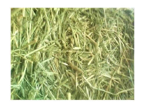 HAY-TIMOTHY-LARGE BAGS