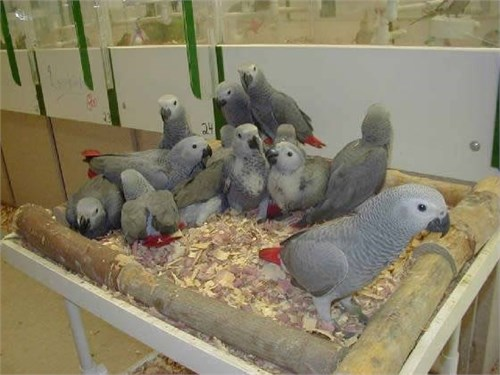 Extremely parrots now
