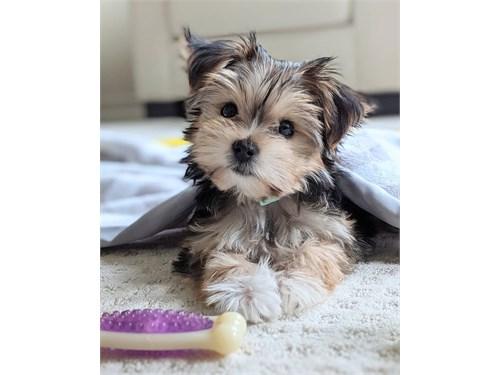 LISA the cute puppy