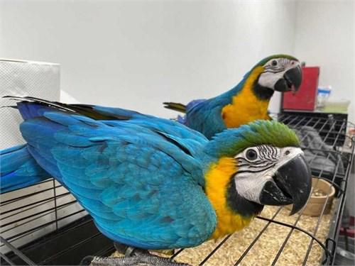 benevolent Macaw parrots